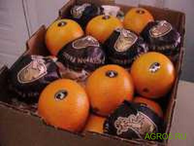 Апельсины на сок сезон 2020