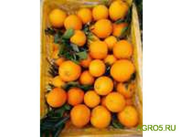 Апельсины на сок свежий