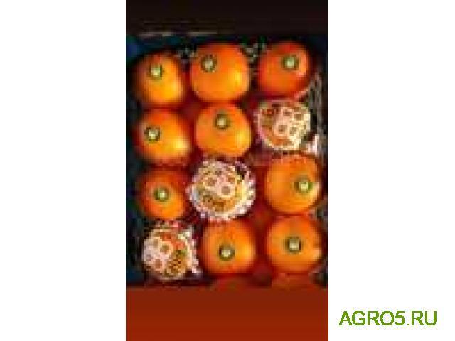 Апельсины на сок новый урожай