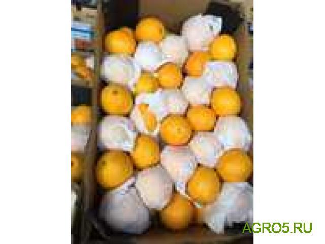 Апельсины Сорт Валенсия сезон 2020