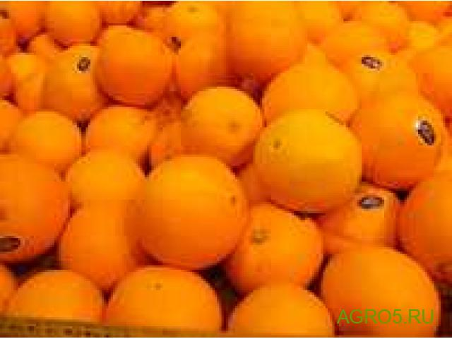 Апельсины Сорт Валенсия свежий