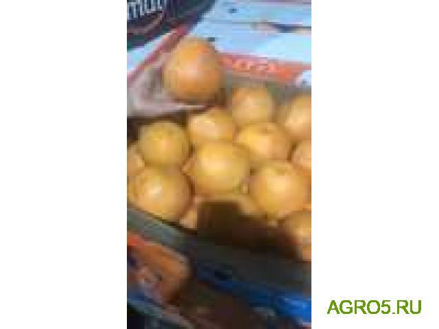 Апельсины Валенсия оптом