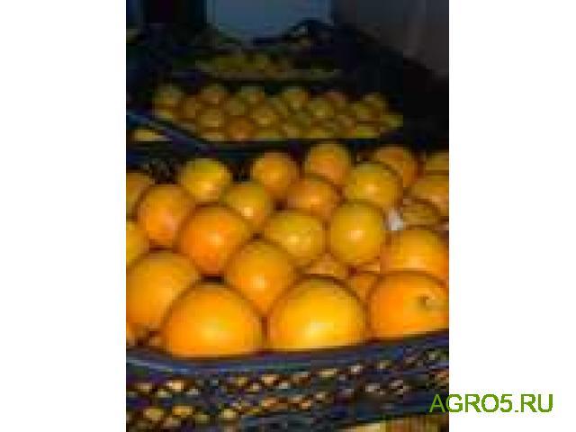 Апельсины Валенсия свежий