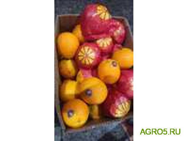 Апельсины Валенсия новый урожай