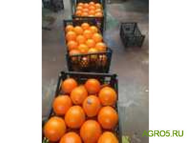 Апельсины из Турции от производителя