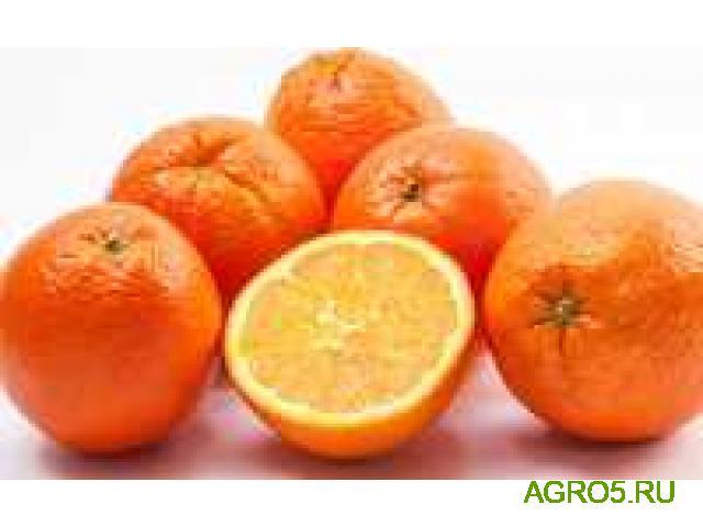 Апельсины из Турции сезон 2020