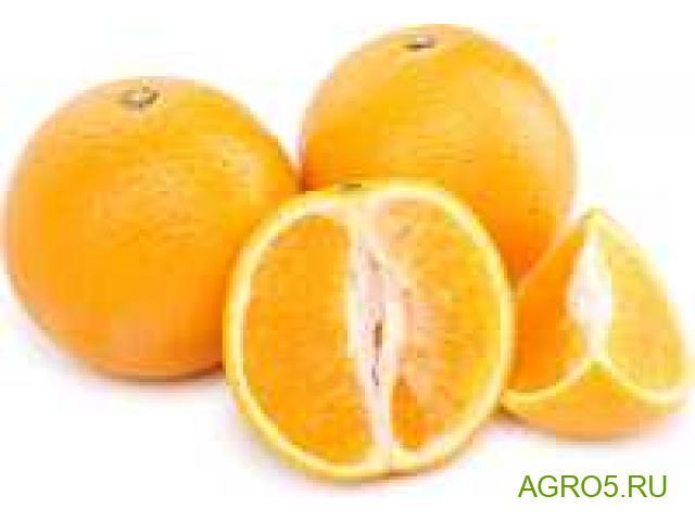 Апельсины из Турции свежий