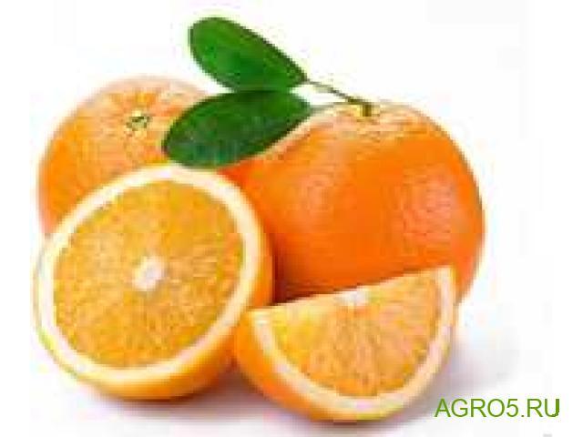 Апельсины из Турции новый урожай