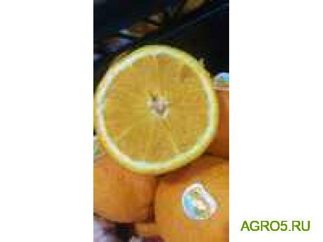 Апельсины Марокко оптом