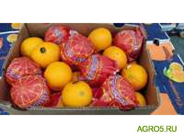 Апельсины Марокко от производителя