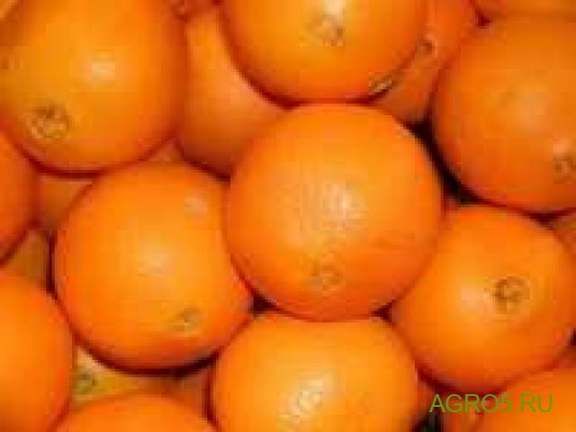Апельсины Марокко свежий