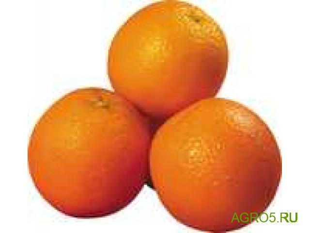 Апельсины Марокко новый урожай