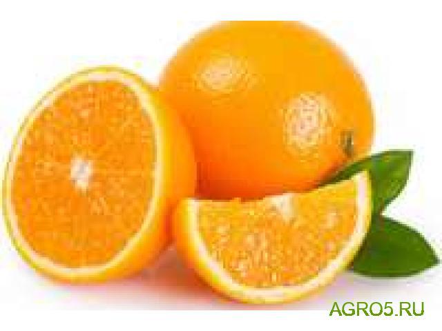 Апельсины Марокко высокого качества