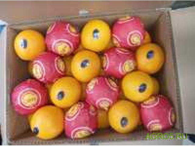 Апельсины сорт Марок Лейт оптом