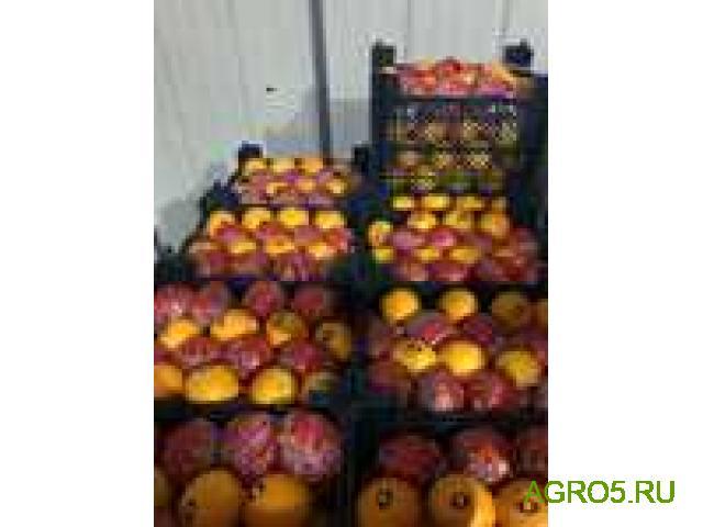 Апельсины сорт Марок Лейт от производителя