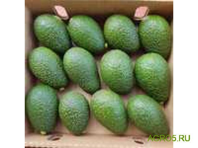 Авокадо высокого качества