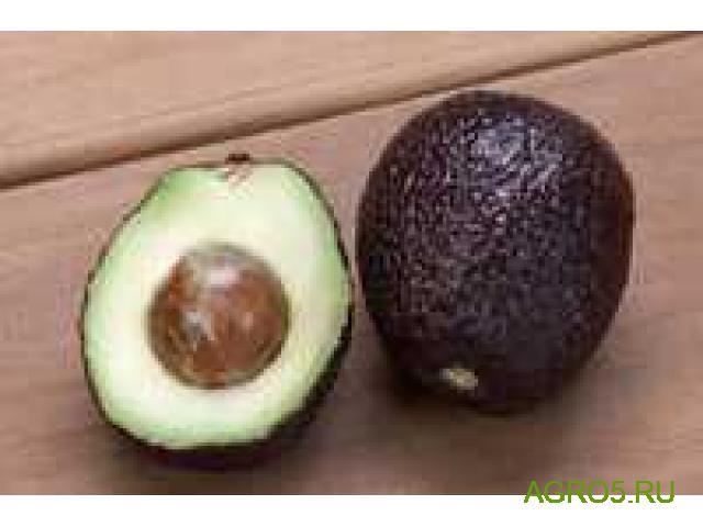 Авокадо продам