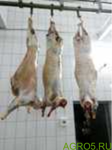 Мясо Баранины, говядины стейки