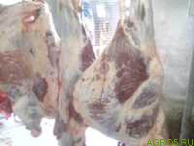 Говядина охлажденная(быки)