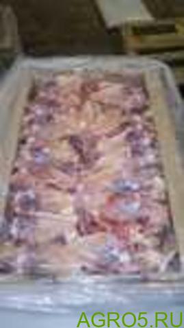 Спинка и грудная кость ПТФ Псковская