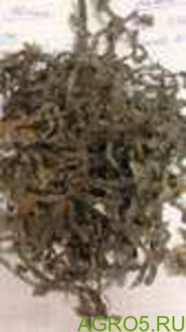Ламинария (морская капуста) оптом