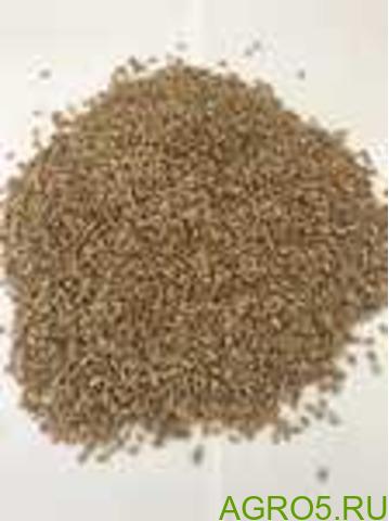 Оптом Пшеница Зерно