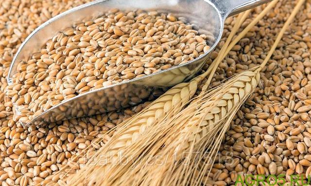 Пшеница 4 класс 18 клейковина 11 протеин 1500т