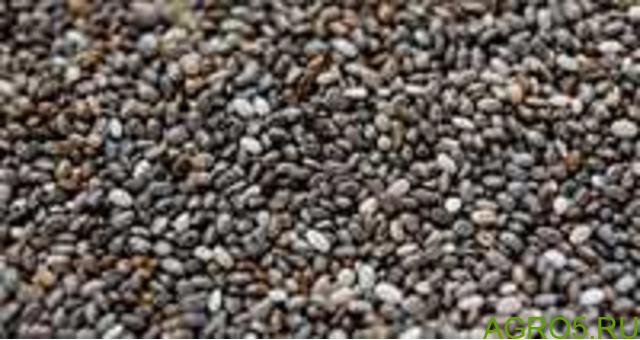 Чиа семена ( испанский шалфей)