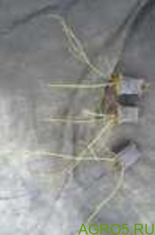 Укорененные черенки голубики оптом