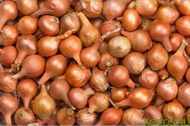 Продаем лук севок 15 т в наличии