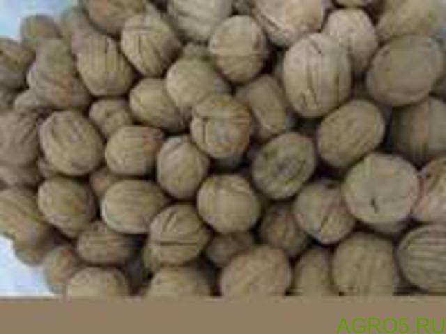Грецкий орех в скорлупе (32/34 /КИТАЙ/ (меш (10 кг)