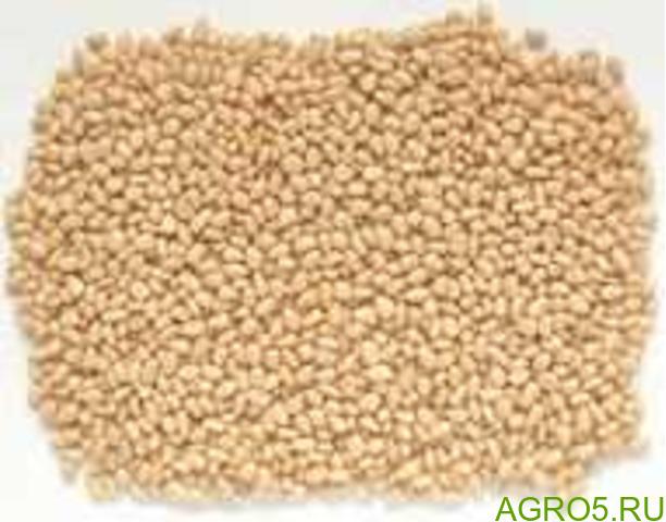 Ядро кедрового ореха / Cedar nut kernel