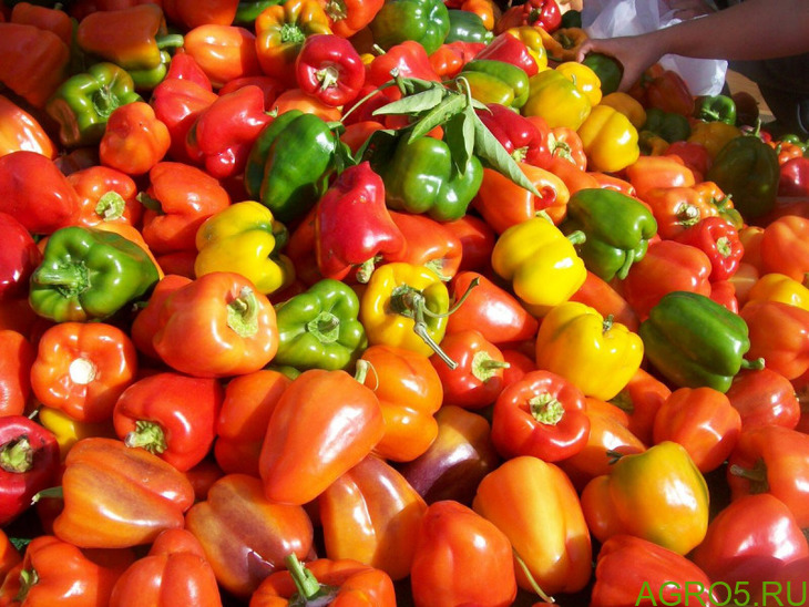 Продаю перец(болгарский и горький) оптом