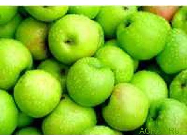 Яблоки высокого качества