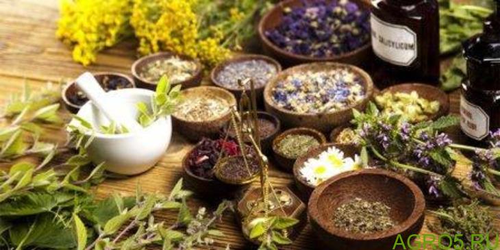 Травяные чаи Горного алтая