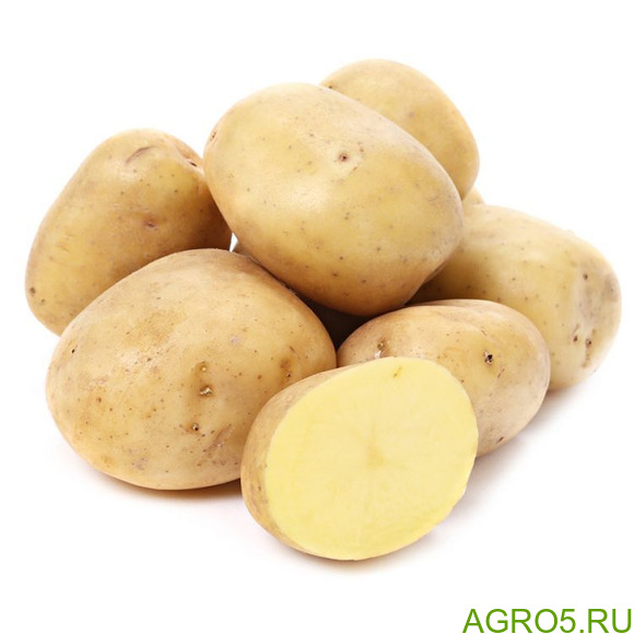 Картофель оптгм