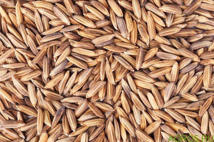 Рис сырец цена 15 рублей