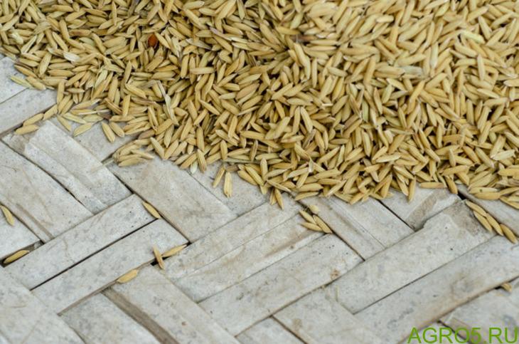 Гост рис сырец