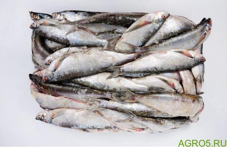 Свежемороженая рыба мелкий опт