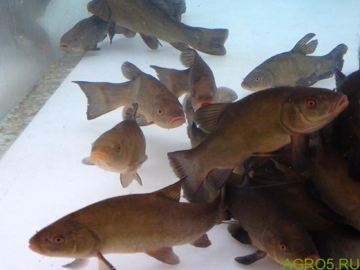 Купите живую рыбу у нас!