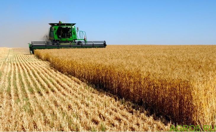 продать урожай пшеницы