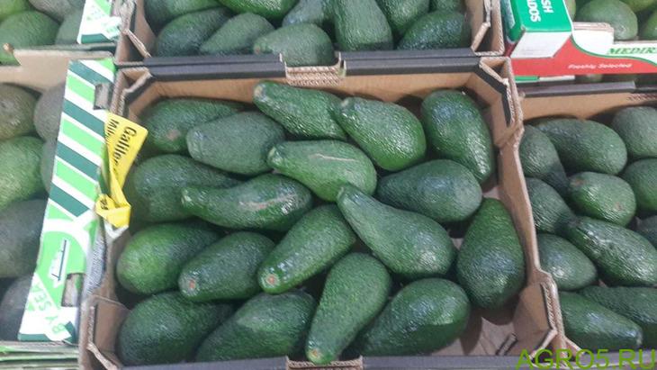 Авокадо прямые поставки