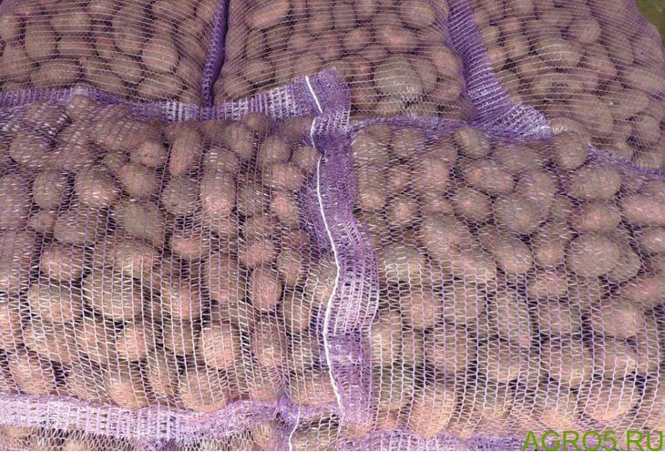 Семенной картофель, сеянка, мемфис, ред скарлет, розара, семена, семена картофеля